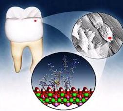 cientificos japoneses crean esmalte dental artificial